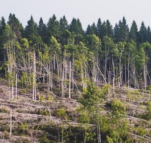 Monitore Planos de Ação de Aspectos e Impactos Ambientais